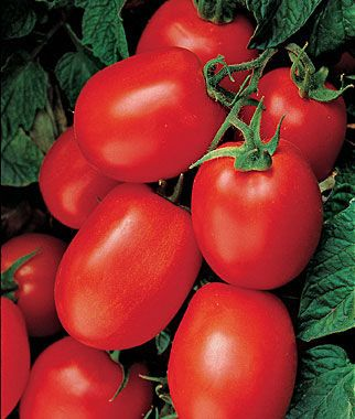 Varieties of tomatoes to grow in pots 28