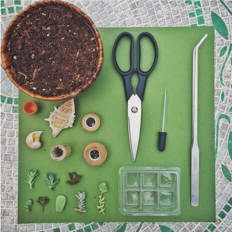 Mini arrangements of succulents in pots not conventional 1