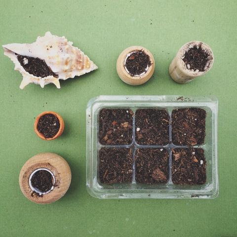 Mini arrangements of succulents in pots not conventional 6