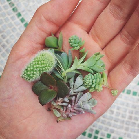 Mini arreglos de suculentas en macetas no convencionales - Cactus en macetas pequenas ...