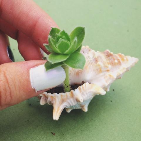 Mini arrangements of succulents in pots not conventional 9