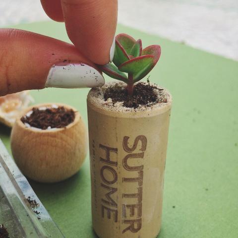 Mini arrangements of succulents in pots not conventional 10