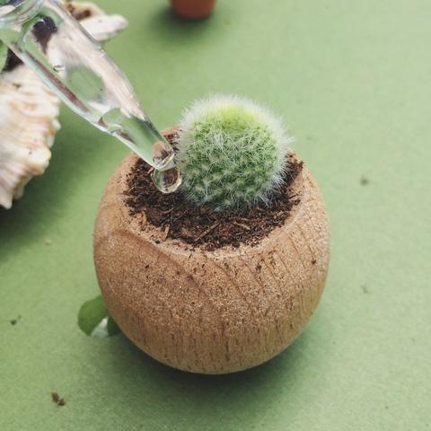 Mini arrangements of succulents in pots not conventional 11