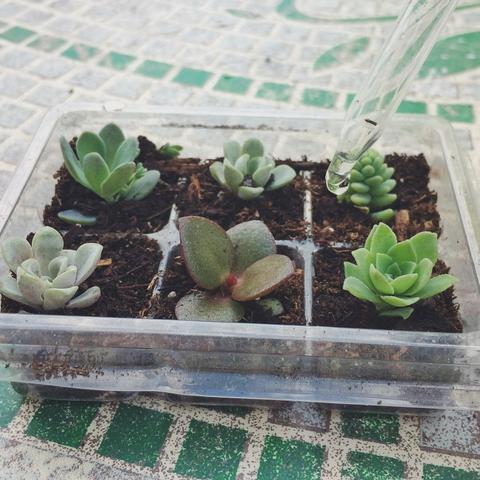 Mini arrangements of succulents in pots not conventional 12