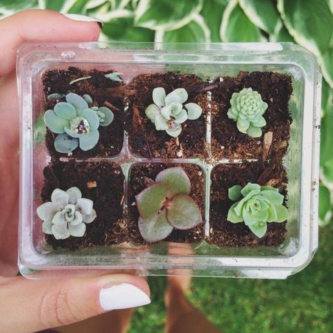 Mini arrangements of succulents in pots not conventional 14