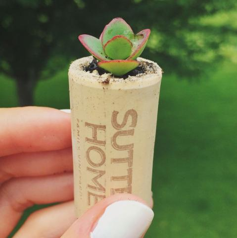 Mini arrangements of succulents in pots not conventional 15