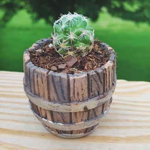 Mini arrangements of succulents in pots not conventional 17