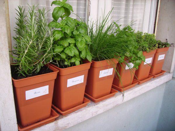 Montar un jardín de hierbas en una maceta