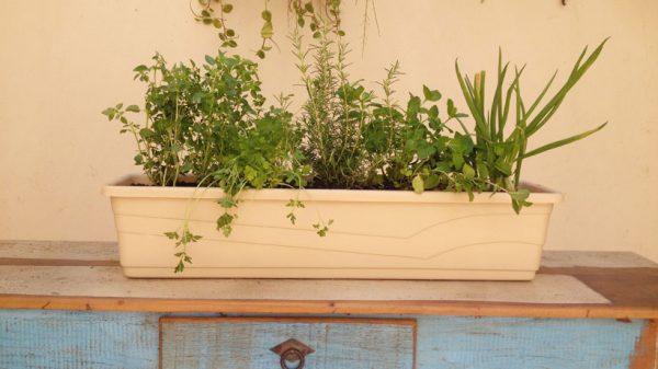 Assemble a herb garden in a pot 5