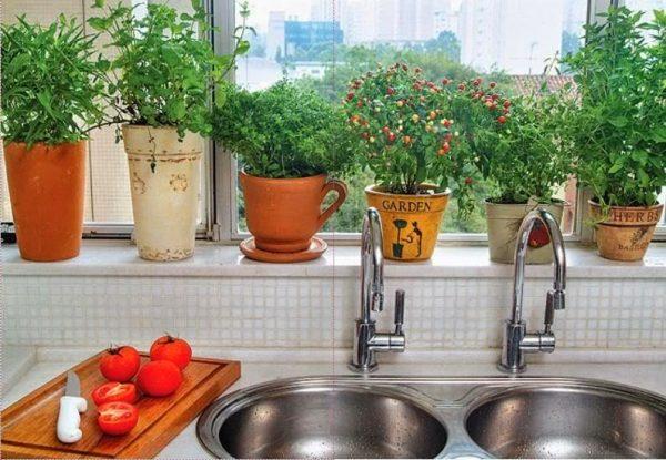 Assemble a herb garden in a pot 6
