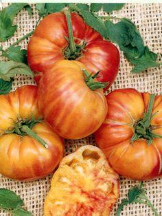 Varieties of tomatoes to grow in pots 19