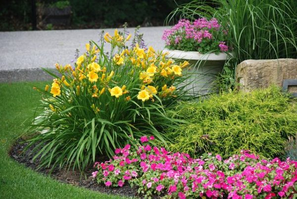 How to improve and prolong the flowering of your plants 3