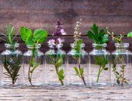 imagen 12 hierbas aromáticas para cultivar en agua todo el año