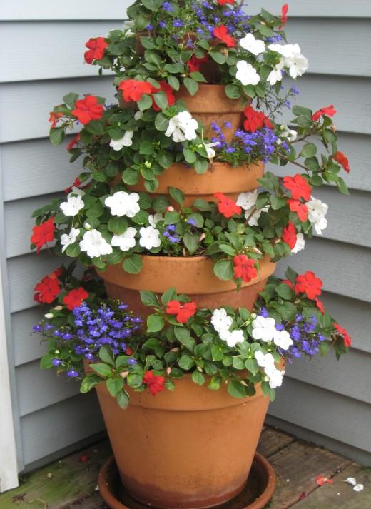 Plantas anuales para cultivo en sombra - Flores de sombra ...