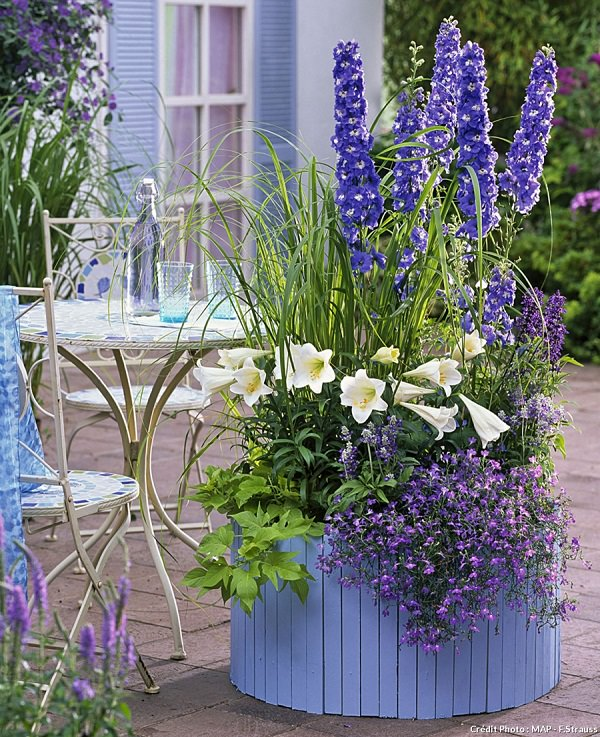 Plants of blue flower to cultivate in a pot 6