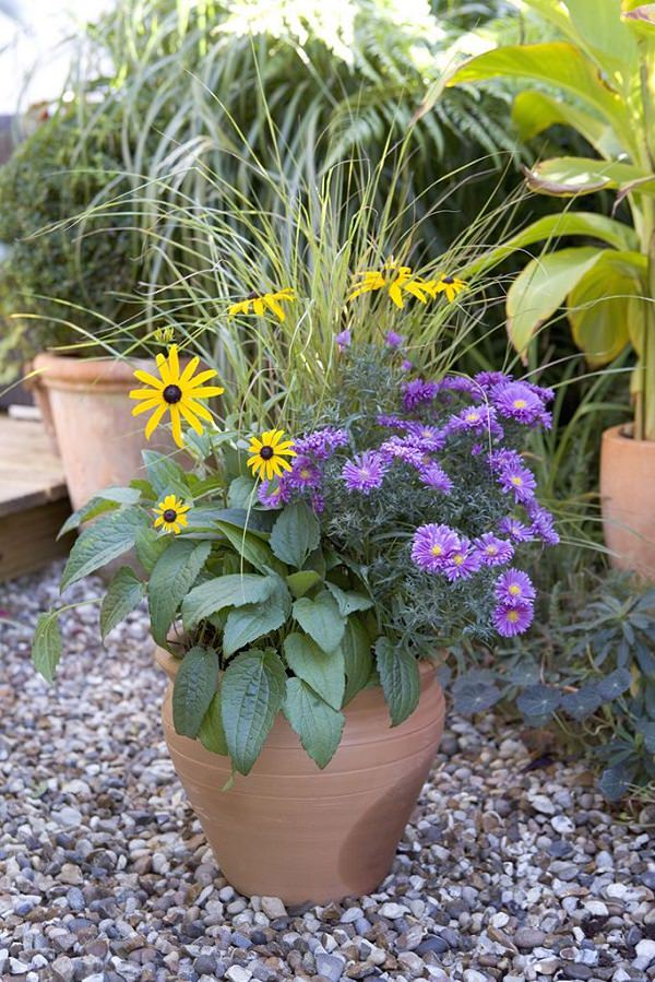 Plants of blue flower to cultivate in a pot 17