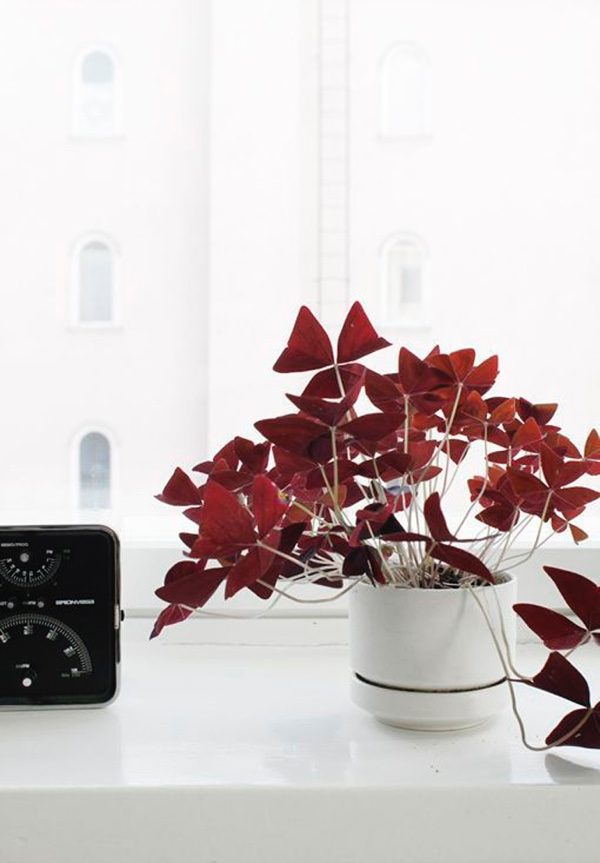 Indoor plants easy to take care of 4