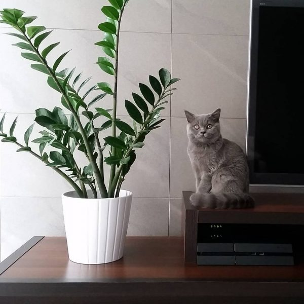 Indoor plants easy to take care of 5