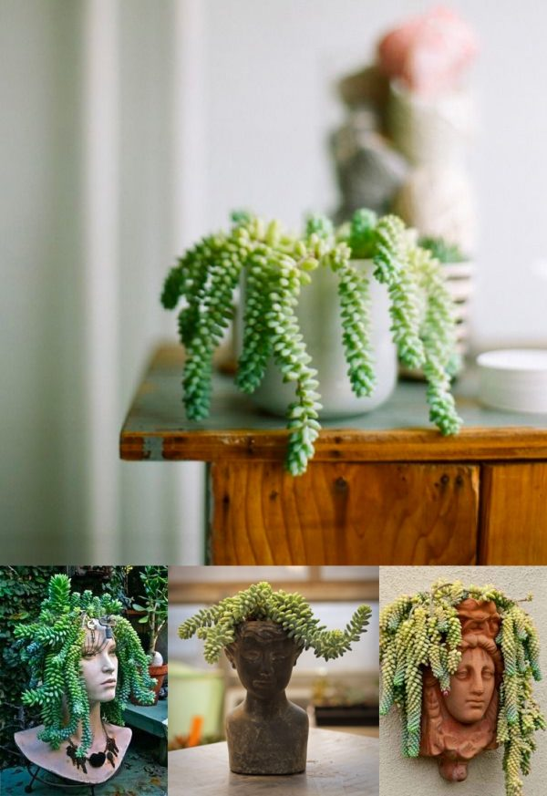 Indoor plants easy to take care of 8