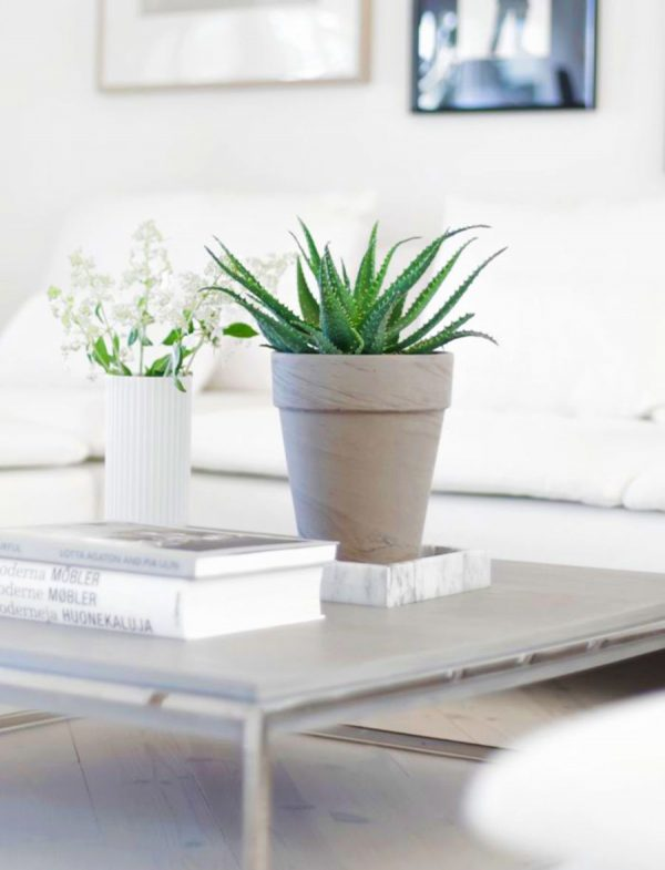 Indoor plants easy to take care of 10