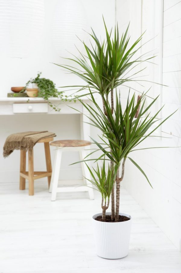 Indoor plants easy to take care of 13