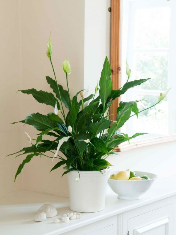 Indoor plants easy to take care of 14