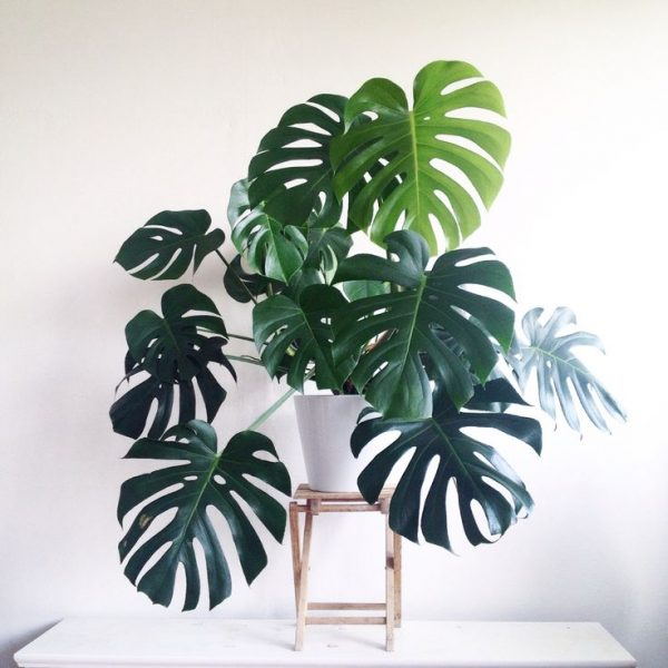Indoor plants easy to take care of 15