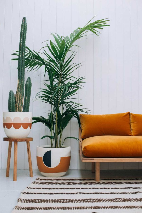 Indoor plants easy to take care of 18
