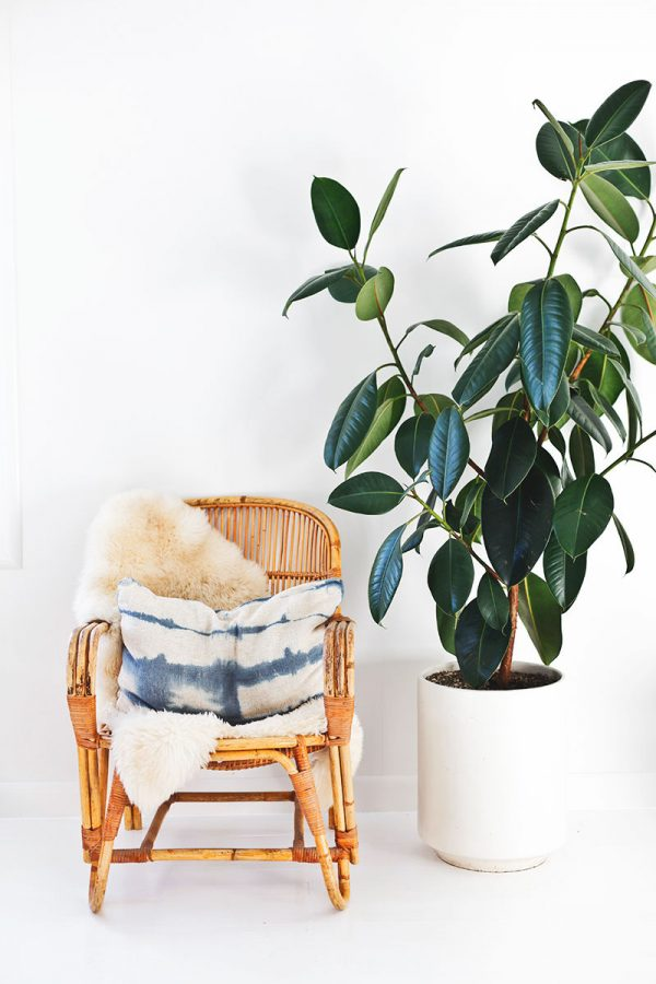 Indoor plants easy to take care of 19