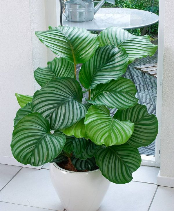 Indoor plants easy to take care of 20