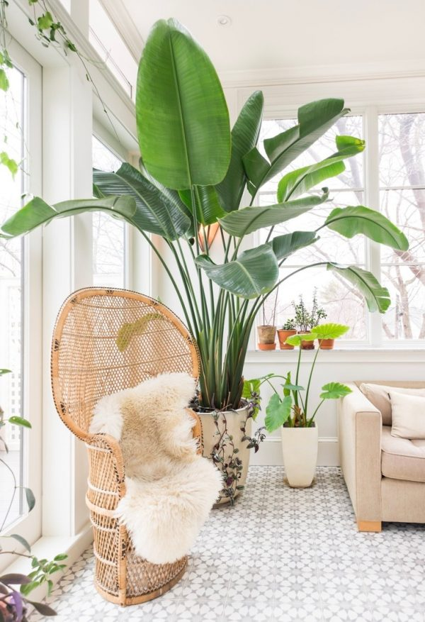 Indoor plants easy to take care of 21