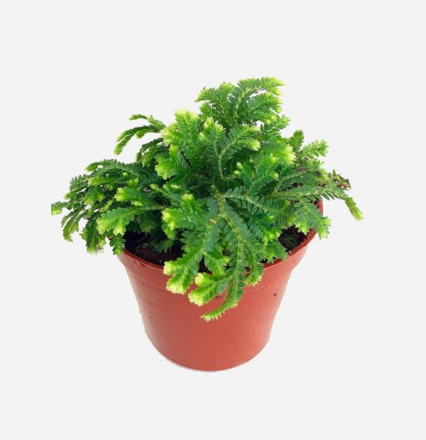 Indoor plants easy to take care of 26