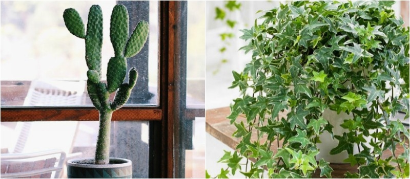 Plantas de interior que absorben la humedad del aire - Plantas de interior duraderas ...