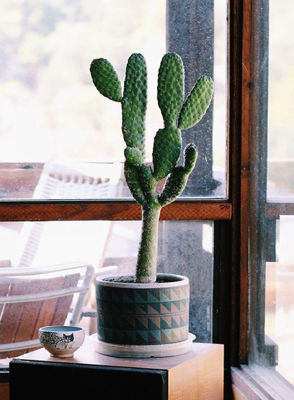 Plantas de interior que absorben la humedad del aire - Cactus de interior ...