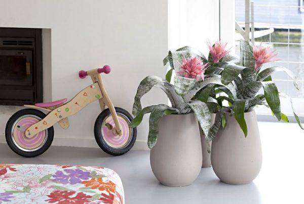 Plantas de interior que absorben la humedad del aire - Quitar humedad del ambiente ...