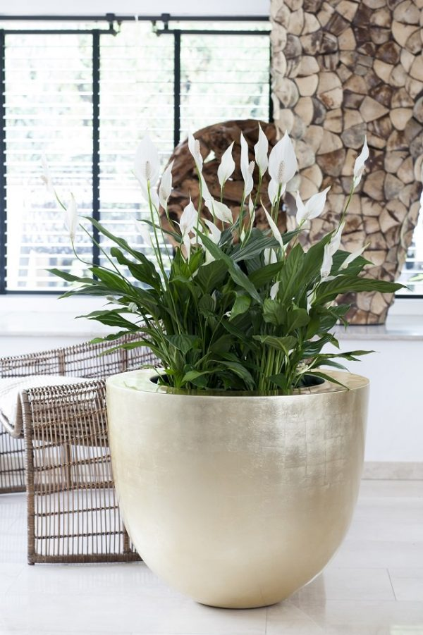 Indoor plants that absorb moisture from the air 4