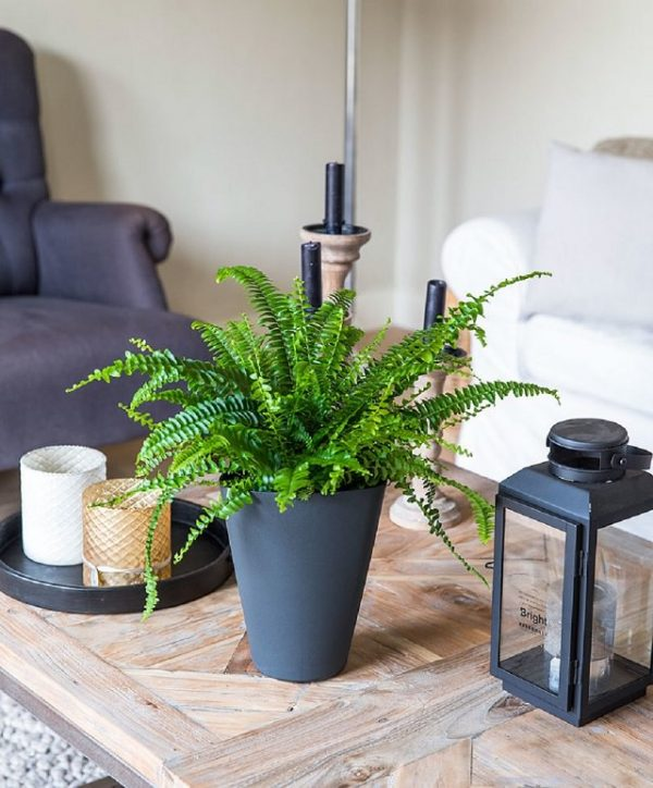Indoor plants that absorb moisture from the air 5
