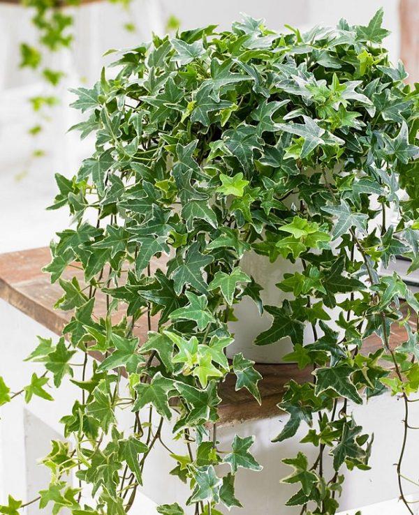 Plantas de interior que absorben la humedad del aire for Plantas de aire