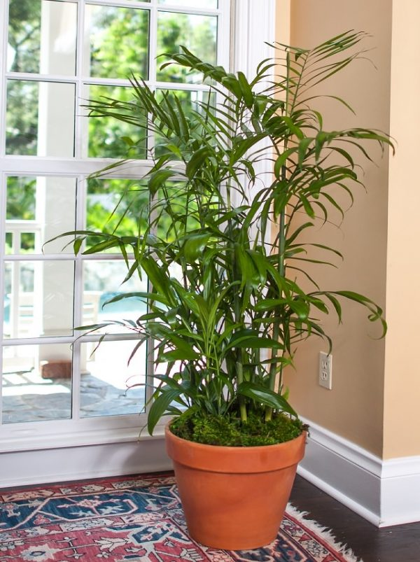 Indoor plants that absorb moisture from the air 7