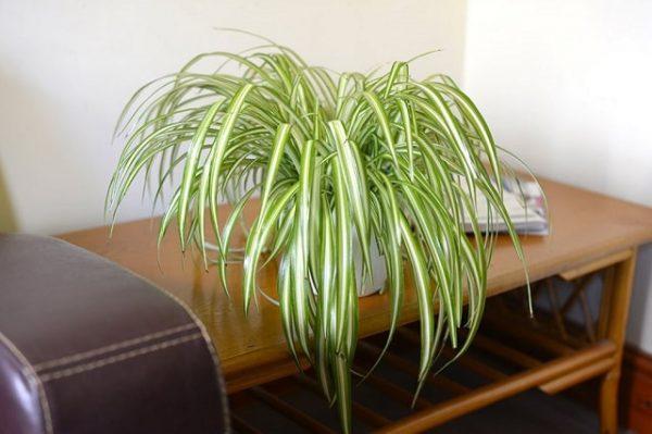 Plantas de interior que absorben la humedad del aire for Plantas en agua interior