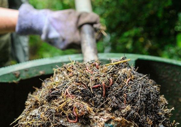 6 uses of glycerine in the garden 1