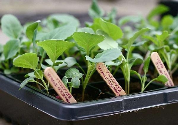 6 uses of glycerine in the garden 5