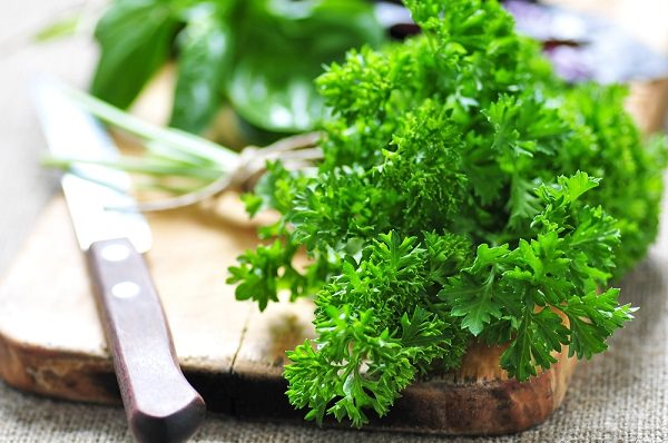 Grow parsley in a pot 4