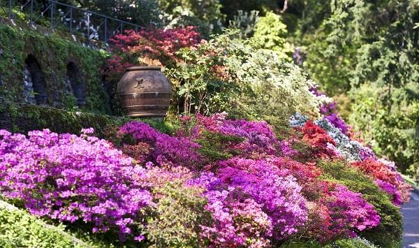 Guide to growing azaleas 2