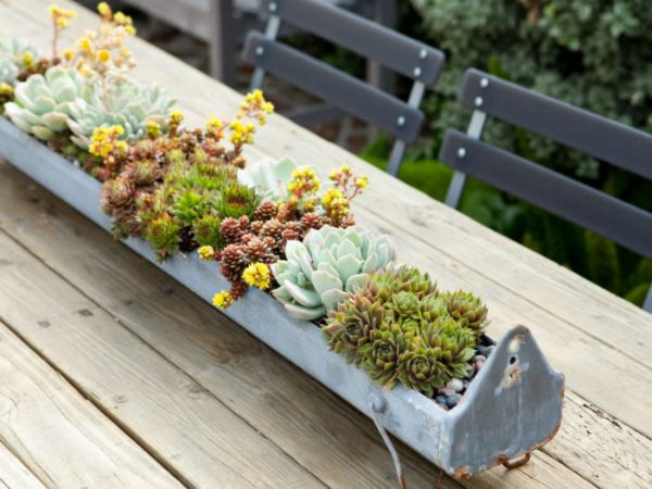 Succulent plants and the light 2