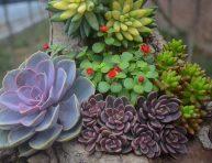 imagen Las plantas suculentas y la luz