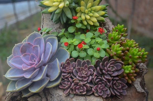 Succulent plants and the light 3