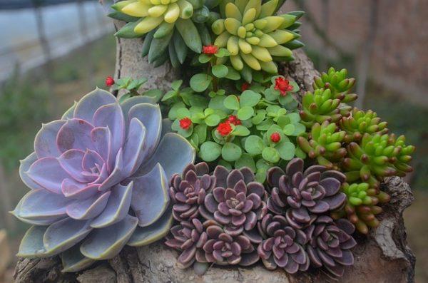 Ver fotos de plantas suculentas 59