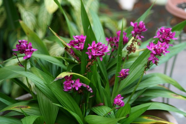 What is the appropriate substrate for each type of orchid 2