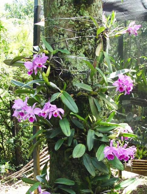 What is the appropriate substrate for each type of orchid 15